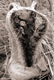 Пальцы Дьявола жуткий гриб
