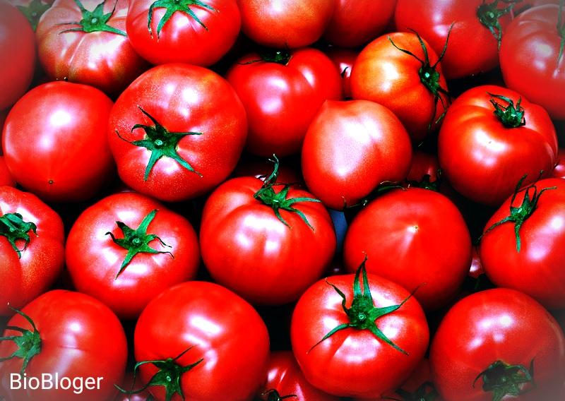 Как собирать помидоры
