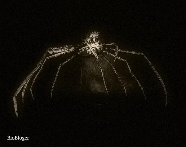 Жизненный цикл паука краба