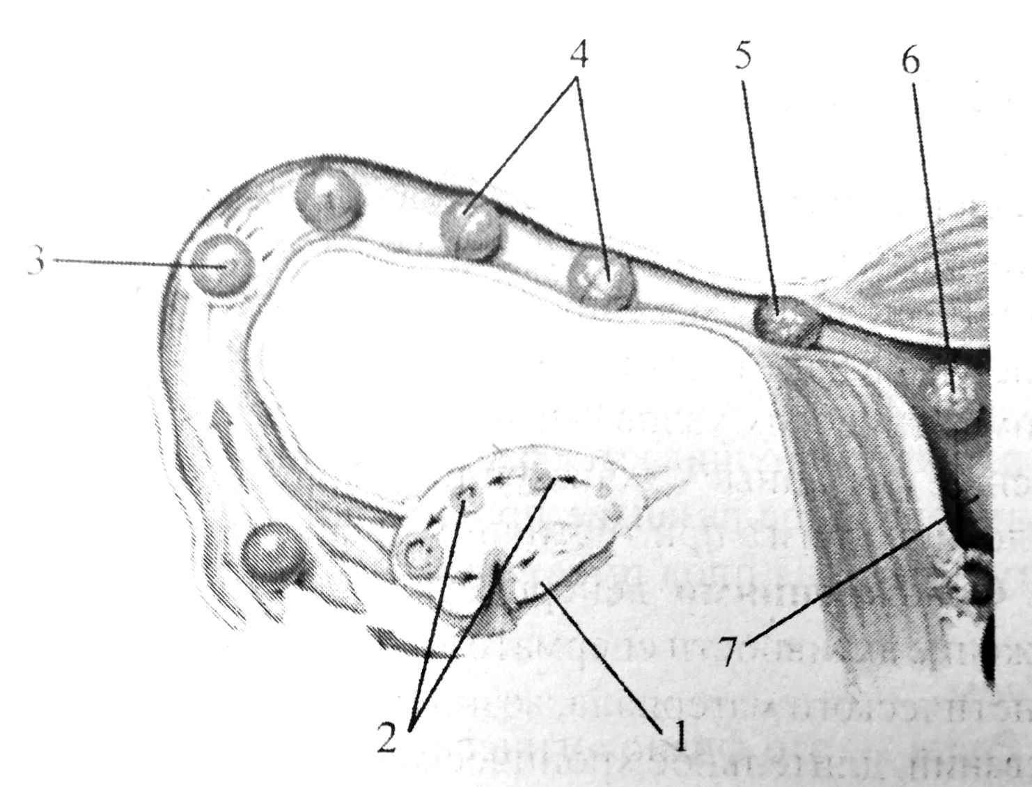 Начальные стадии развития зародыша