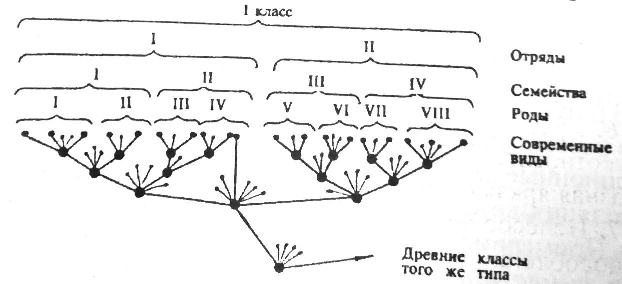 Схема дивергенции