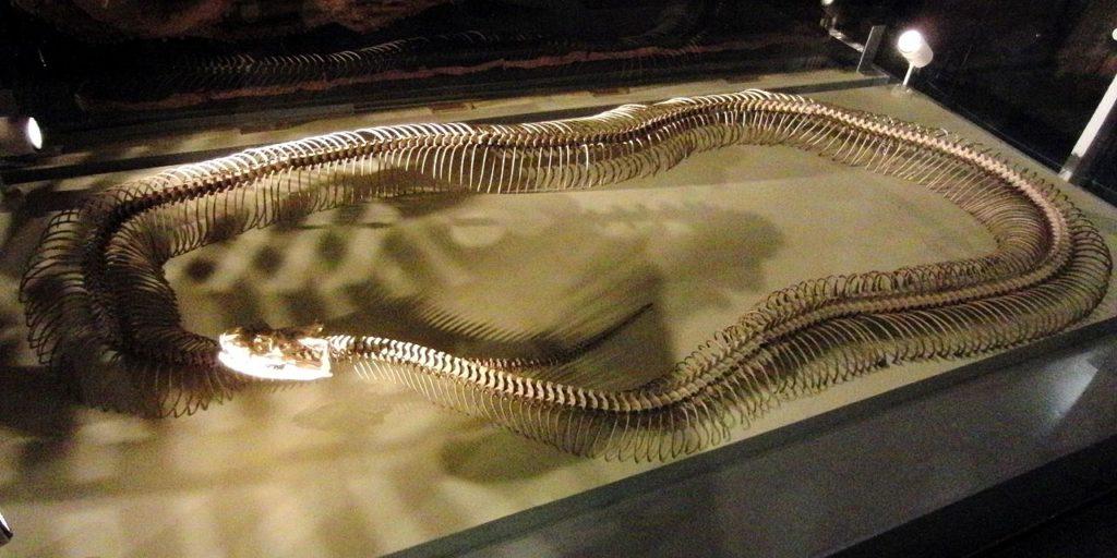 Анаконда в японском музее