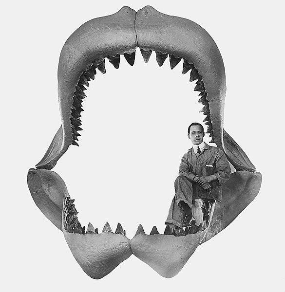Размер акулы Мегалодон