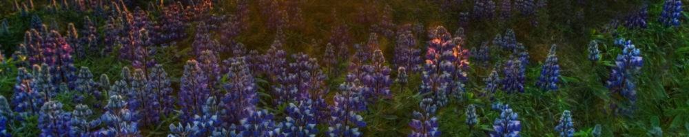 https://biobloger.ru/wp-content/uploads/2019/02/Поле-с-цветками-1000x200.jpg