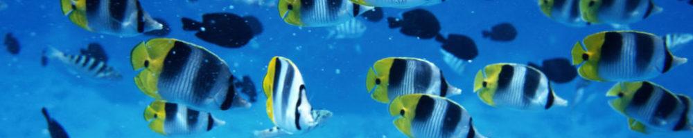 https://biobloger.ru/wp-content/uploads/2019/02/underwater-wallpaper-1600x900-001-1000x200.jpg