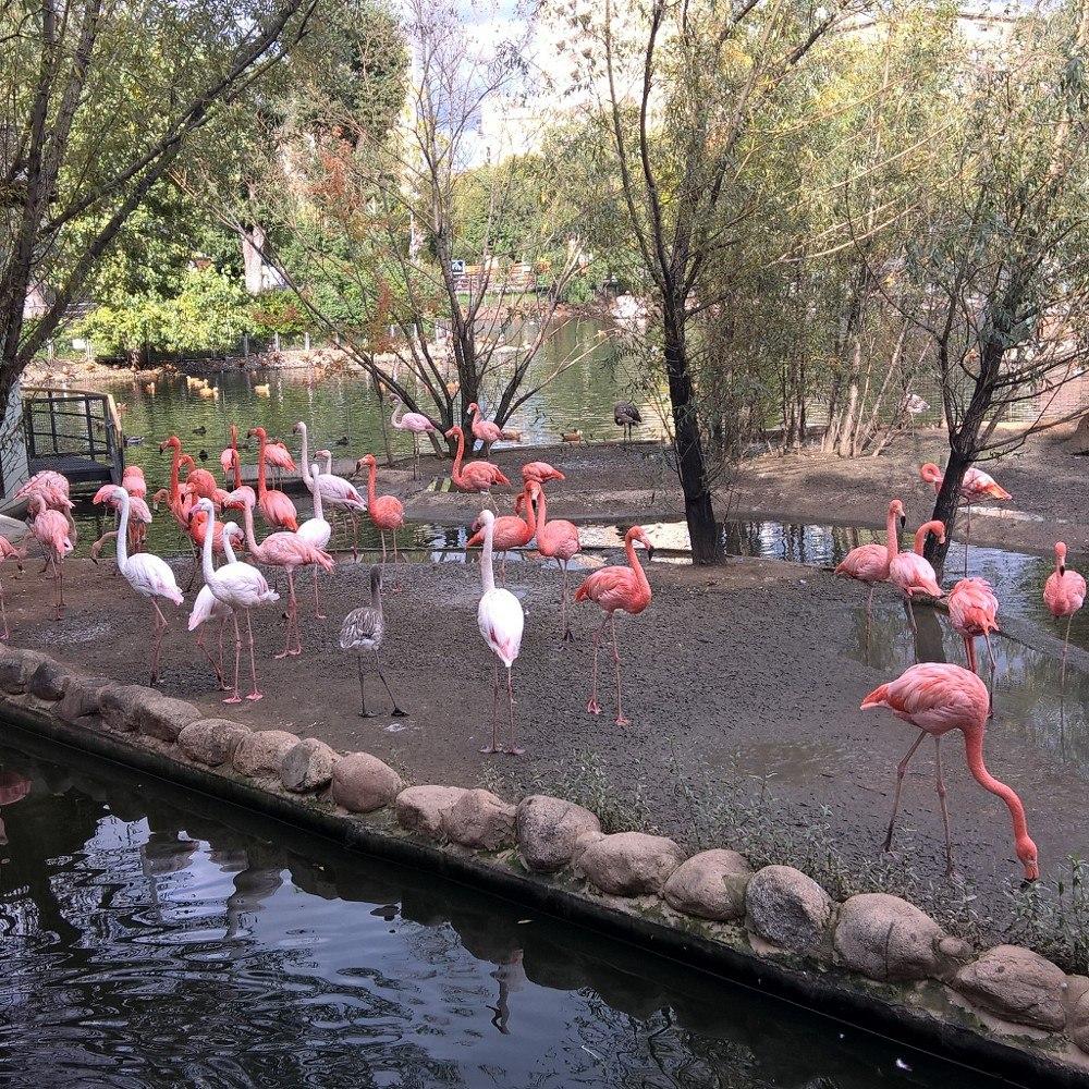 Розовые фламинго в зоопарке