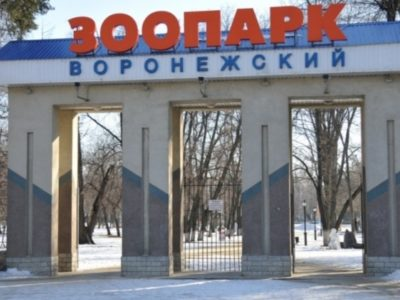 https://biobloger.ru/wp-content/uploads/2019/07/IMG_20190721_155714-400x300.jpg